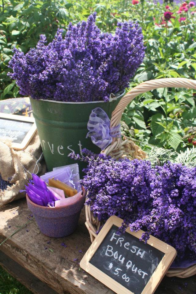 Home Decor home decor Mood Board: Summer Flowers Color Inspiration in Your Home Decor Flower Mood Board Lavander