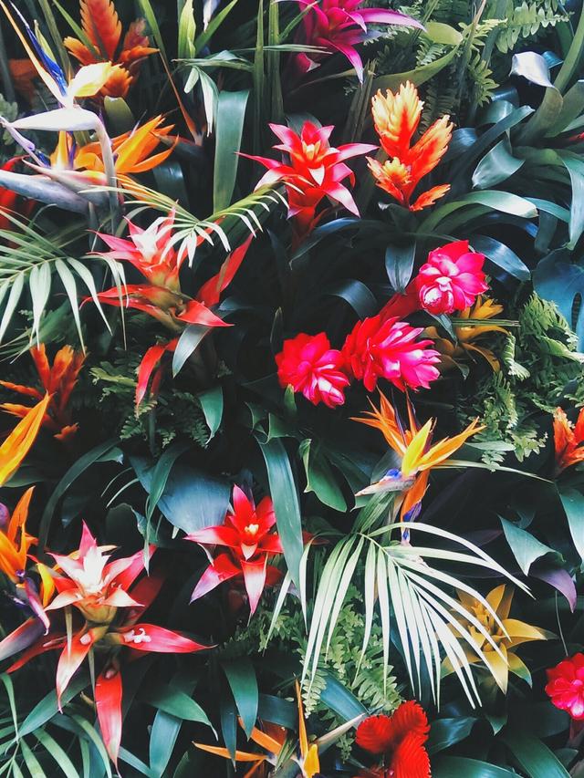 Mood Board: Summer Flower Color Inspiration home decor Mood Board: Summer Flowers Color Inspiration in Your Home Decor Flower Mood Board Tropical