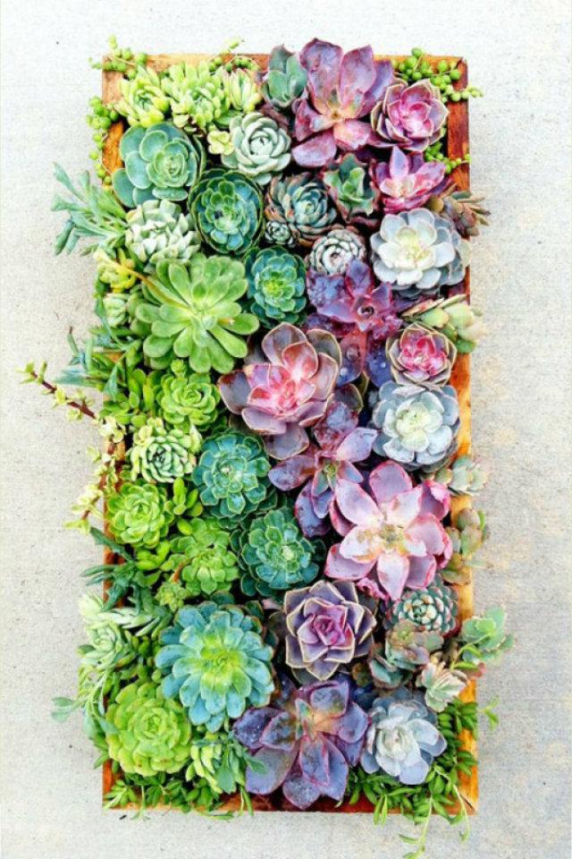 Mood Board: Summer Flower Color Inspiration home decor Mood Board: Summer Flowers Color Inspiration in Your Home Decor Flowers Mood Board Cactus Color