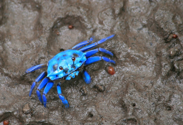 Ocean Deep Blue Mood Board  Deep Ocean Blue Mood Board Inspiration Mood Board Blue Crab