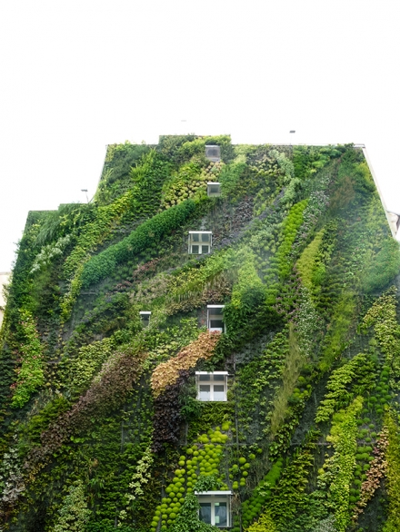 Eyes on the wall: breathtaking vertical gardens
