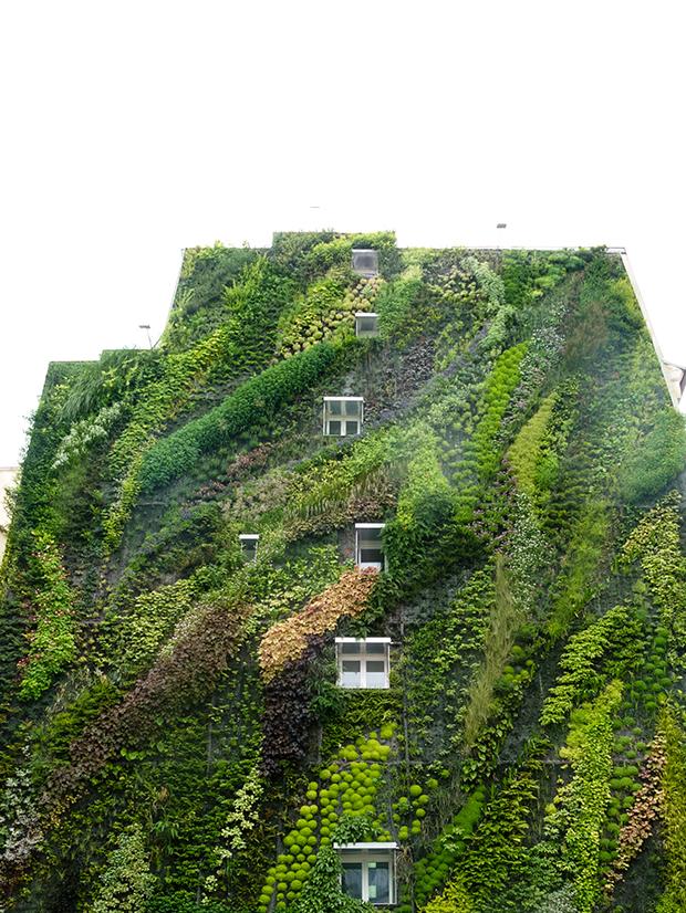 Vertical gardens vertical gardens Eyes on the wall: breathtaking vertical gardens vertical gardens 5