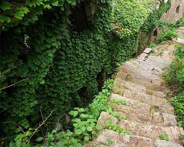 vertical-gardens-9 vertical gardens Eyes on the wall: breathtaking vertical gardens vertical gardens 9