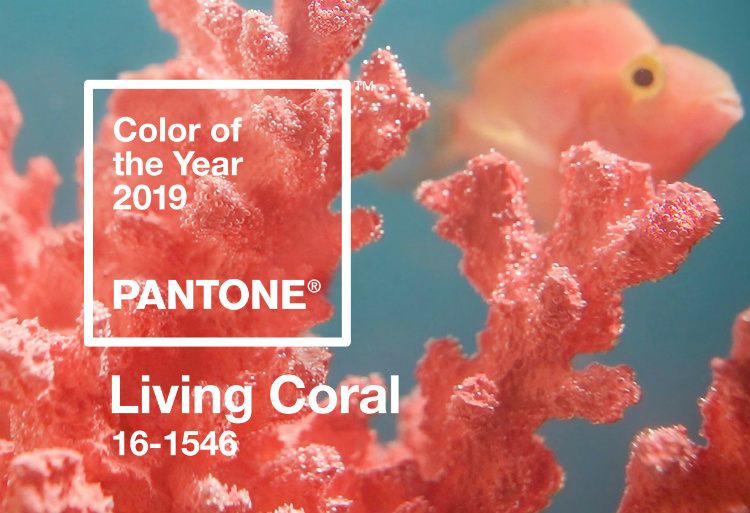 Living Coral - The Pantone Color of 2019